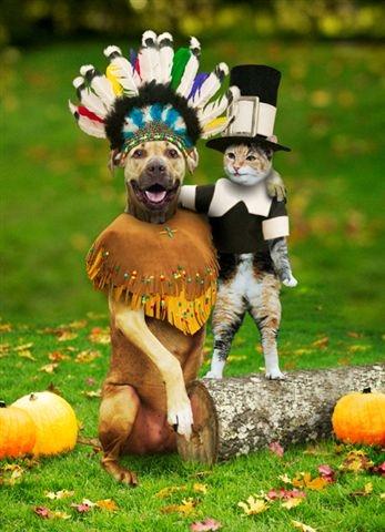 thanksgivingdogandcat