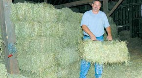 Eric Wackerlin stacks bales in the mow of his barn as the final step of baling hay. Wackerlin grows alfalfa hay on 200 acres in the Hinckley -Waterman area.