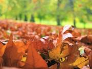 leavesonground