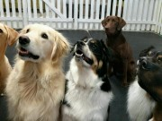 daycare-pic[1]