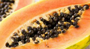 7ransgenic or *M2 papaya was introduced in Hawaii in to combat papaya ringspot Yirus a disease that threatened to wipe out the Hawaiian papaya industry Most of the papaya produced in Hawaii today is transgenic