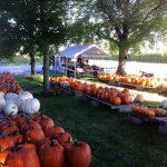 bountiful-blessings-pumpkins
