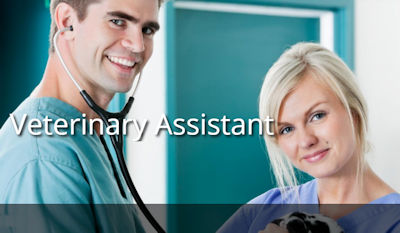 Veterinary Assistant online editing company