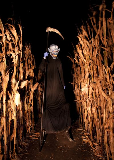 People head to local pumpkin patches for authentic experience.