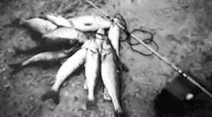 IDNR officials spoiled a good fish story albeit probably saved a trip to the doctor, hospital or morgue when they confiscated this stringer from a local fisherman.