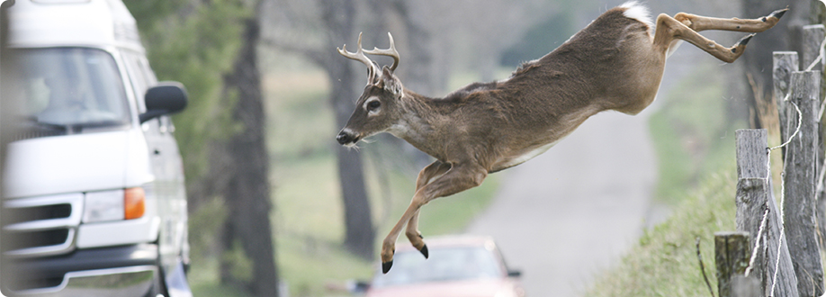 deer-jumping-over-fence