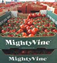 mighty-vine