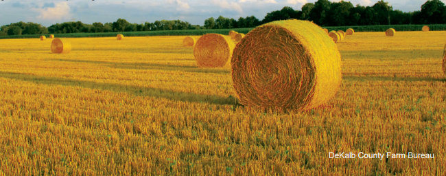 Fascinating Farm Facts: Hay and Straw