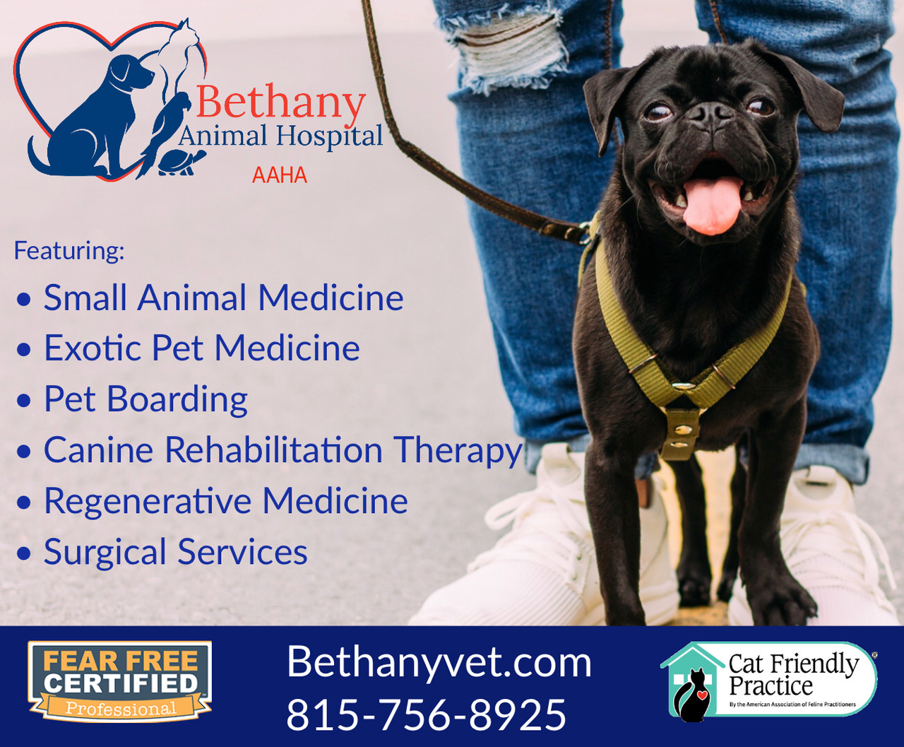 bethany animal hospital, animal clinic, veterinary, veterinary hospital, vet, dr, exotic, pets, cat, dog, rabbit, snake, ginny pig, turtle, canine rehabilitation, therapy, boarding, kennel, pet care, pet sitting, dog walking, cat boarding, carlos dominguez, heather brown, melissa corson, deb schelkopf, leann gruber, pet medicine, medical, dentals, surgery, orthopedic, spay, neuter