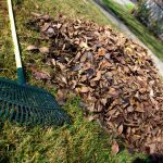 Curbside Pickup of Landscape Waste in DeKalb Resumes April 1st