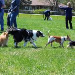 Sycamore Park District Adds Dog Park