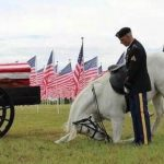 Veterans Administration Suspends Military Funerals