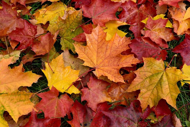 DeKalb Leaf Collection Begins 10/26/20