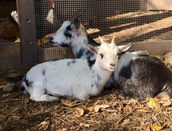 Tin Shed Farm