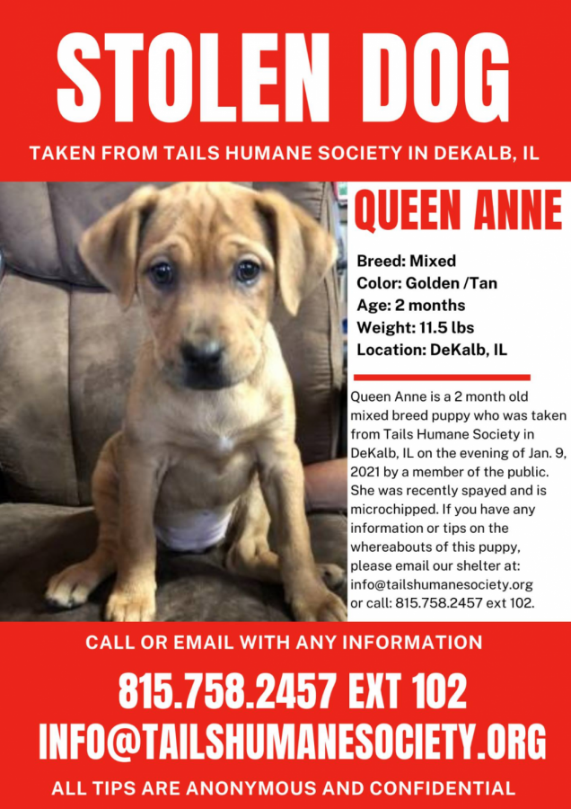 Tails Humane Society Reports Stolen Puppy