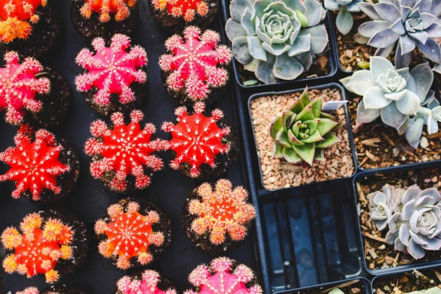 Graduate Students Sell Valentine's Day Succulents
